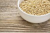 stock photo of sorghum  - gluten free - JPG