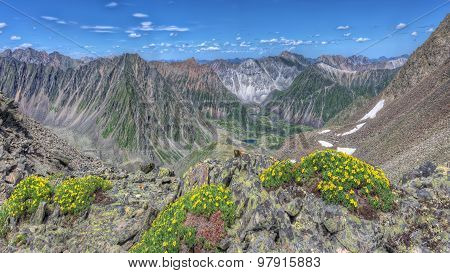 Yellow Flowers (potentilla Biflora) On A Background Of Mountain Ranges