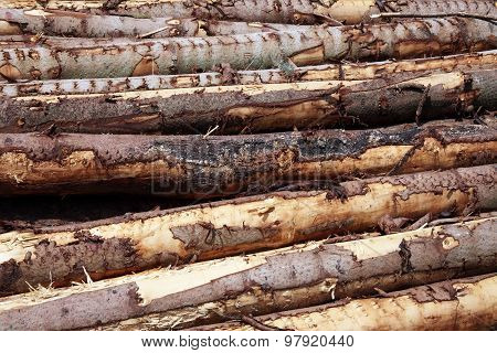 Forest pine trees logs background