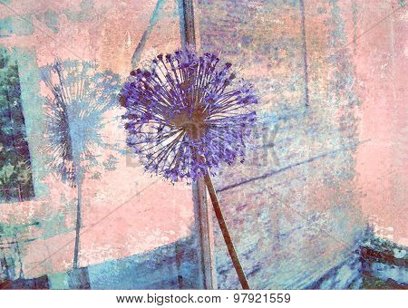 Blue Allium Flower Reflected In A Window Pane.