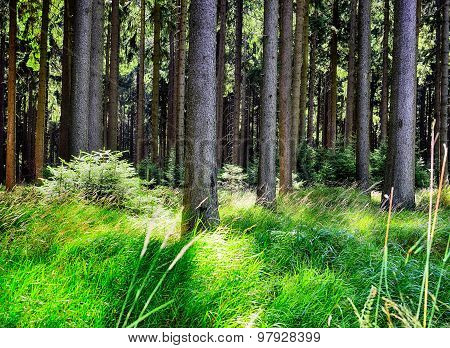 Forest In Summer Time