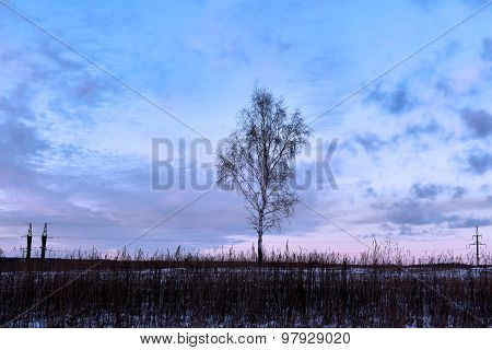 Dormant Birch In Middle Of Winter Snow-covered Field