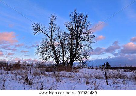 Dormant Tree On Winter Snowy Field