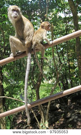 two macaques are resting on the handrail, Batu caves