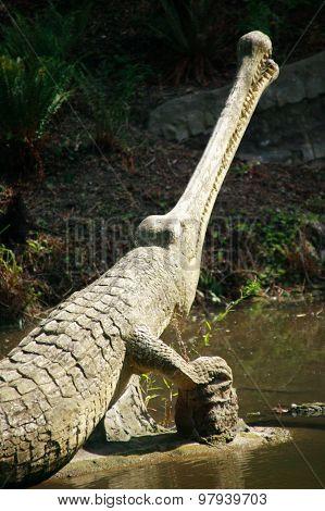 Teleosaurus dinosaur