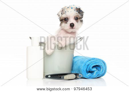 Chinese Crested Puppy Sitting In In The Bath Bucket