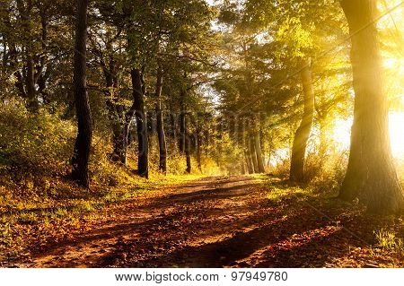 Sunset On A Forest Path In Autumn