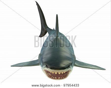 Mammoth Great White Shark
