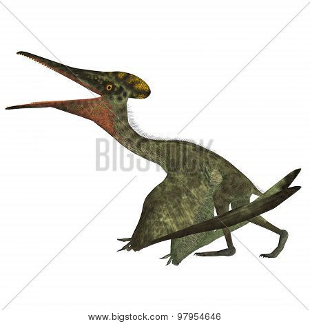 Pterodactylus With Folded Wings