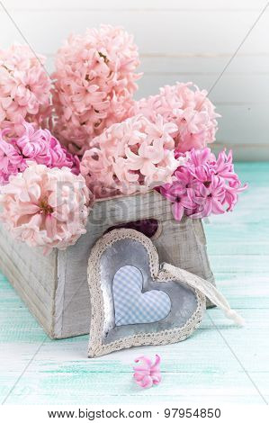 Background With Fresh Pink  Hyacinths In Box And Decorative Heart