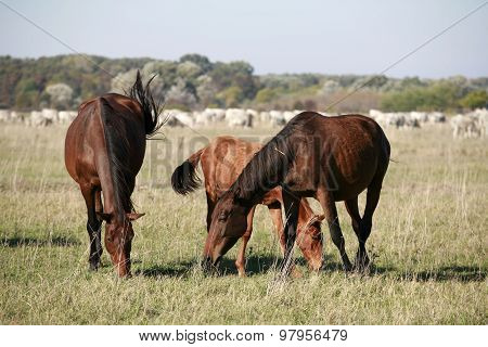 Mare And Her Foal Grazing In The Meadows Rural Scene