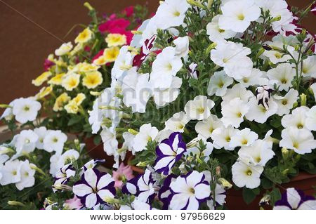 Petunia Garden Decoration