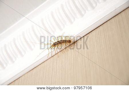 Millipede Centipede