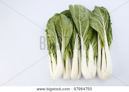 pak choy (chinese cabbage) isolated on white
