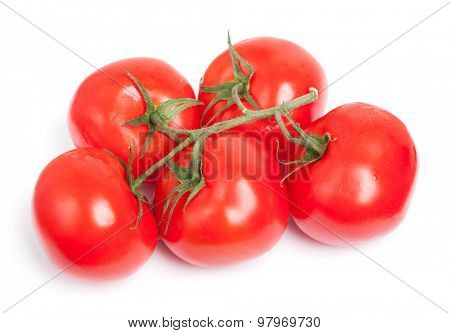 Branch of tomatoes isolated on white background