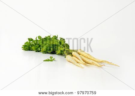 bunch of white parsley roots on white background