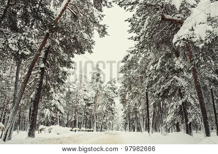 Road In A Winter Forest After Snowfall.
