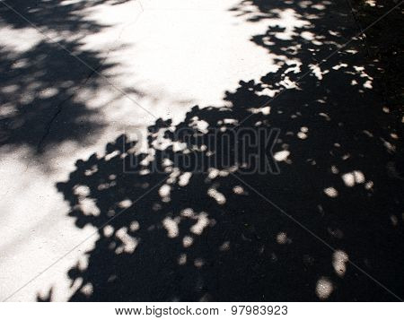 Asphalt Track, Which Falls The Shadow Of The Maple