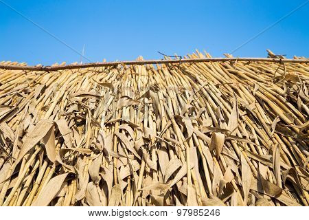 thatched roof at the hut