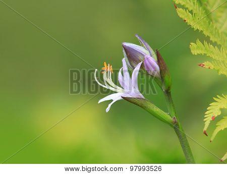 Close up shot of purple flower
