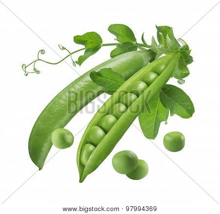Green Peas Pods Open And Closed Isolated 5