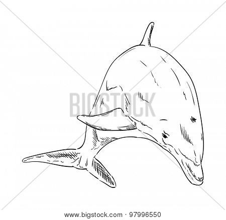 vector -  Dolphins  jumping out of the water