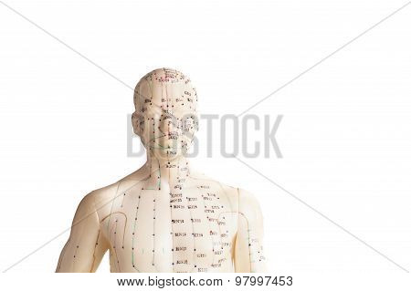Acupuncture Model Of Human