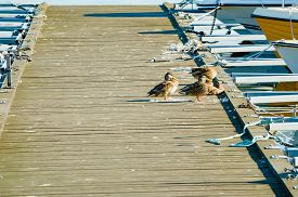 pic of jetties  - Boat jetty full of bird poop and some mallards sitting to one side - JPG