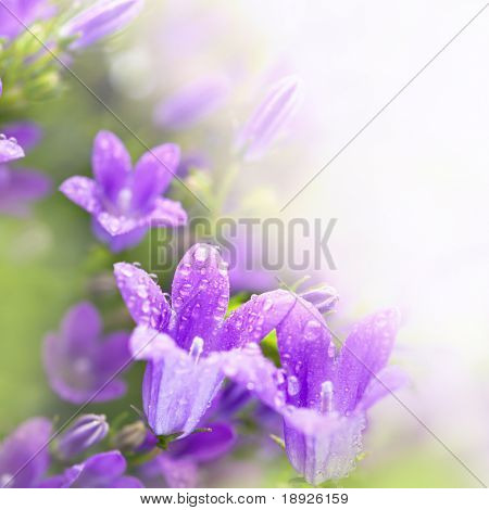 Little spring bell flowers