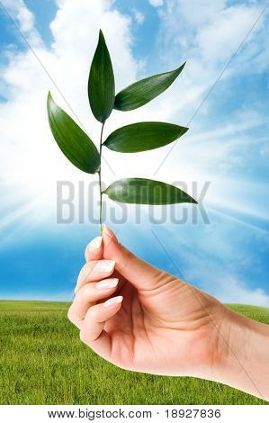 Hand holding a new plant against green hill and blue cloudy sky whit sun
