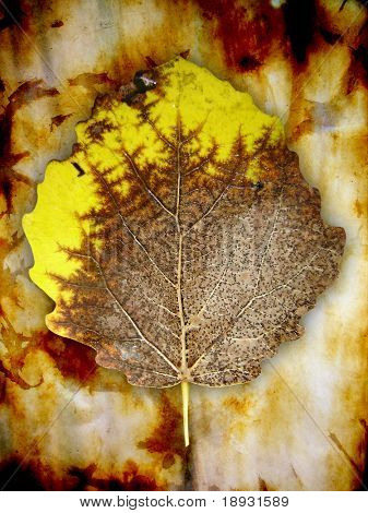 old leaf, grunge autumn background