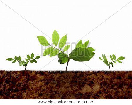 Brotos verdes & solo