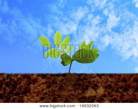Broto verde, solo & céu nublado