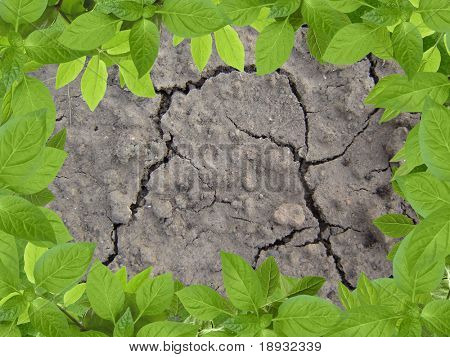 cracky soil & green braird frame