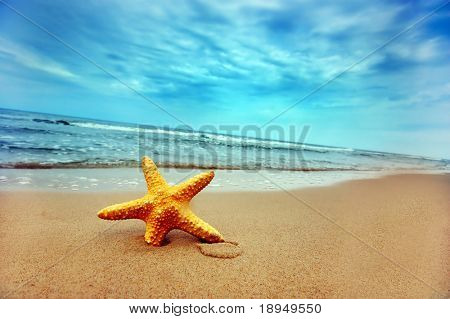Starfish on the Beach - Best for Web Use -