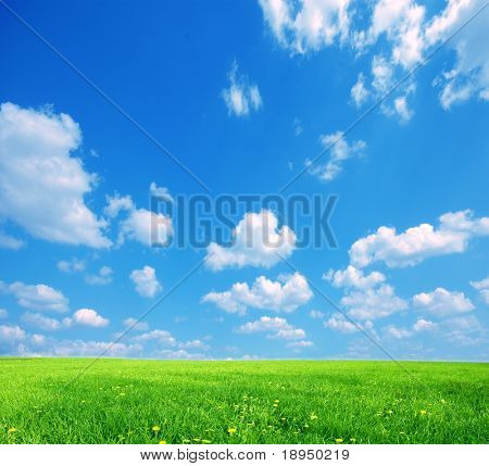 Nature background. Clear spring summer landscape with green grass and blue sky.