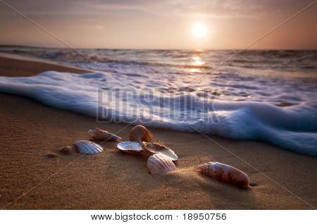 Waves approaching sea shells lying on sand during sunset