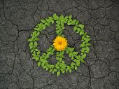 green plant peace symbol on cracked soil