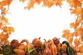 pic of fall leaves  - Pumpkins and gourds on isolated on white background with fall leaves frame - JPG