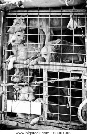 Several dogs confined in a very small cage.