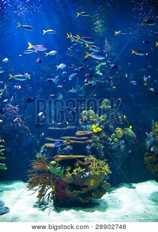 Tropical aquarium full of life.