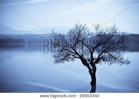 Dead tree in lake, blue toned.