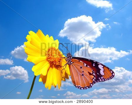 Butterfly On Flower With Cloudy Sky