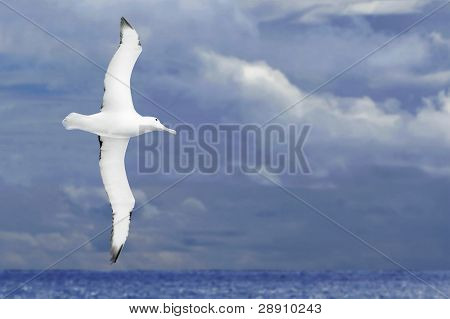 Albatross Flying Over Dark Ocean