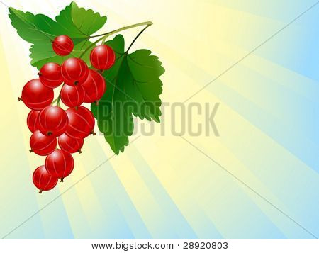 Red currant in sunbeams
