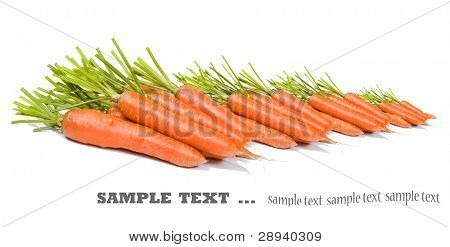 Freshly picked carrots on a pure white background with space fot ext