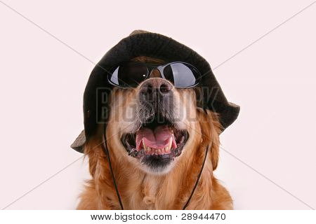 dog with hat and sunglasses