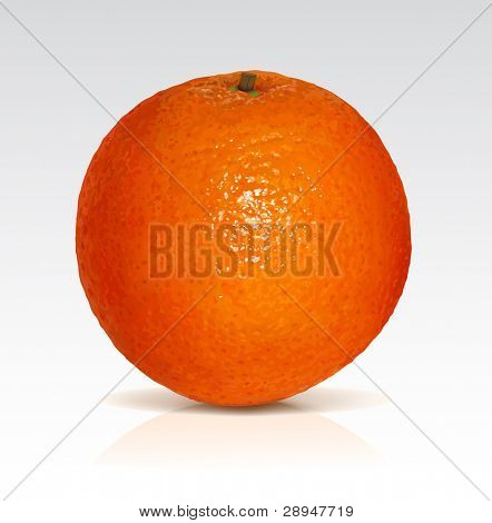 Big fresh orange