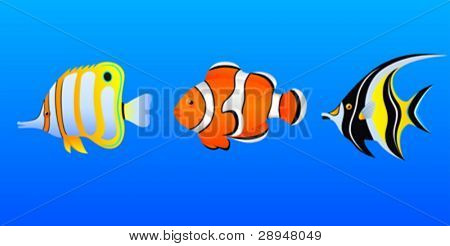 A set of tropical fishes