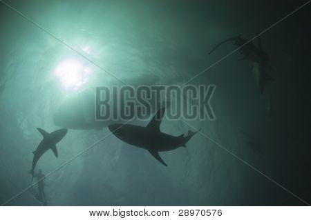 Hai Aktivität